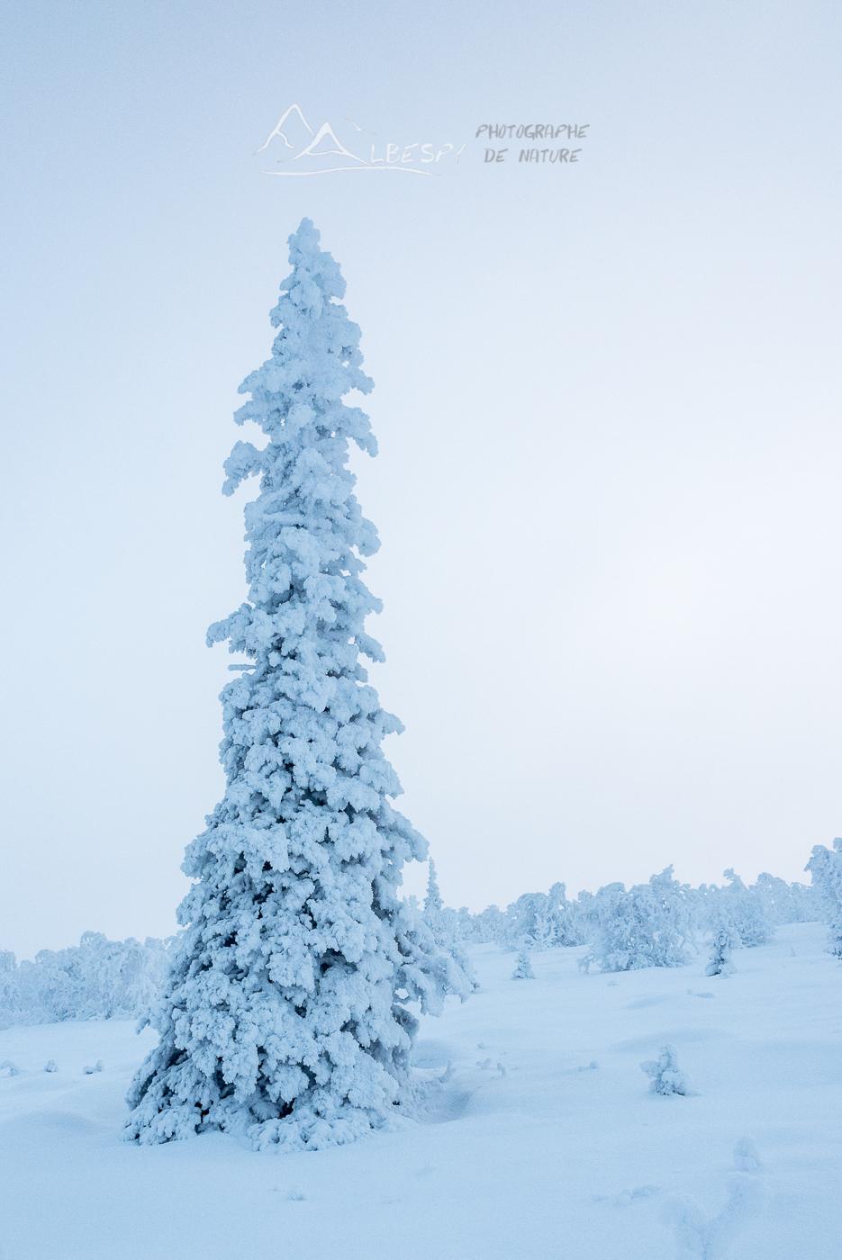 Plus haut vers le froid (Suède) n°1011