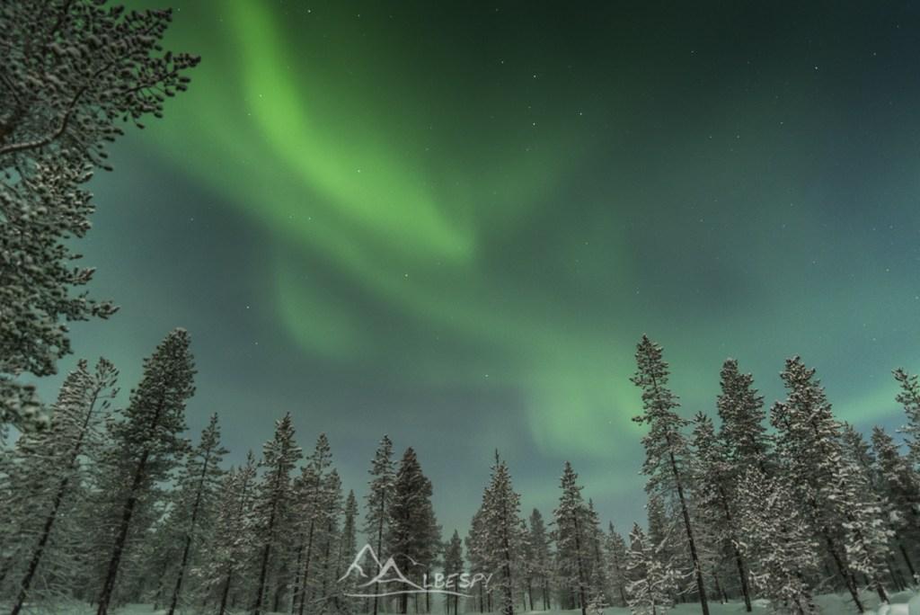 Danse dans la forêt (Hetta - Finlande) n°0903