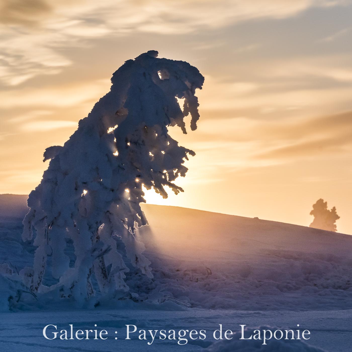Cliquez ici pour accéder à la galerie : Paysages de Laponie