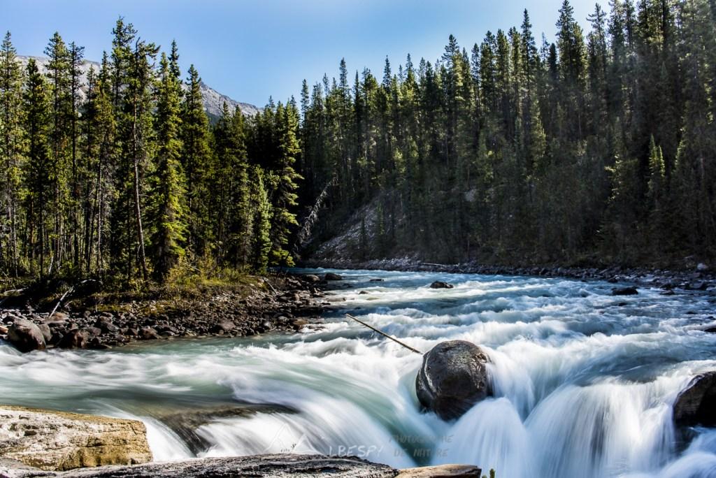 Sunwapta Falls (Parc National de Jasper - Alberta) n°0609