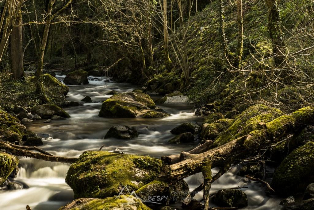 Vert comme Nature (Ruisseau d'Audiernes - Peyrusse le Roc) n°0203
