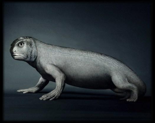 evolution-reptile.jpg