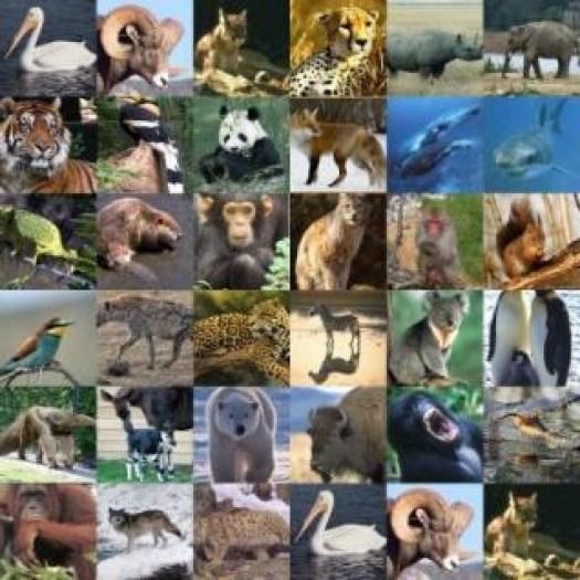 animaux-voie-disparition2.jpeg