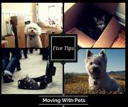 Five Tips For Moving With Pets
