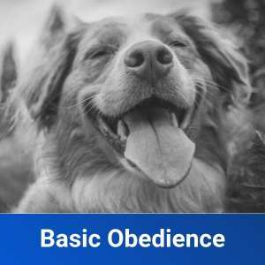 Basic Obedience