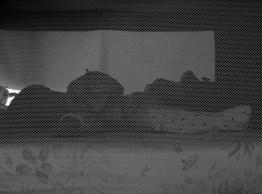 bébé, motif, photographie noir et blanc, Blaize