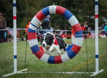 Pet Photography in Royal Oak, agility competition