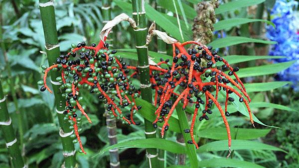 Tropical Berries, photo by Fred Hatt, 2006