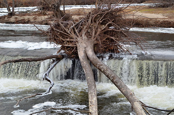 Fallen Tree in Winter Stream, 2012, photo by Fred Hatt