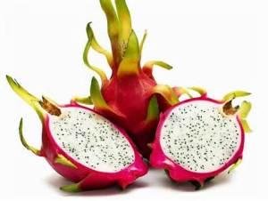 buah naga