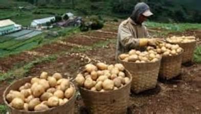 kentangg