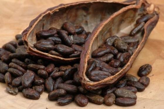 Biji kakao