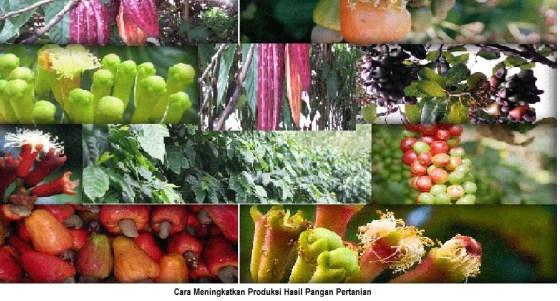 cara meningkatkan produksi pangan pertanian