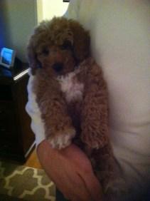 Baby Tucker