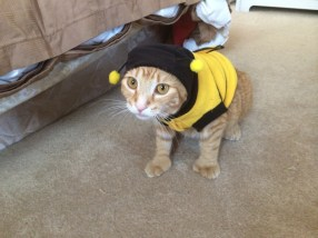 Most convincing bumble bee EVER!