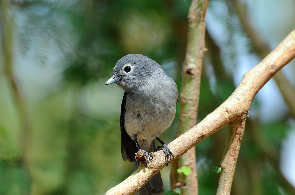 Small kenyan bird