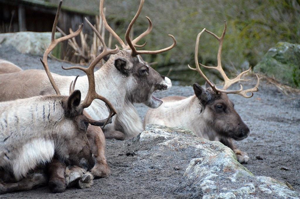 3 elks