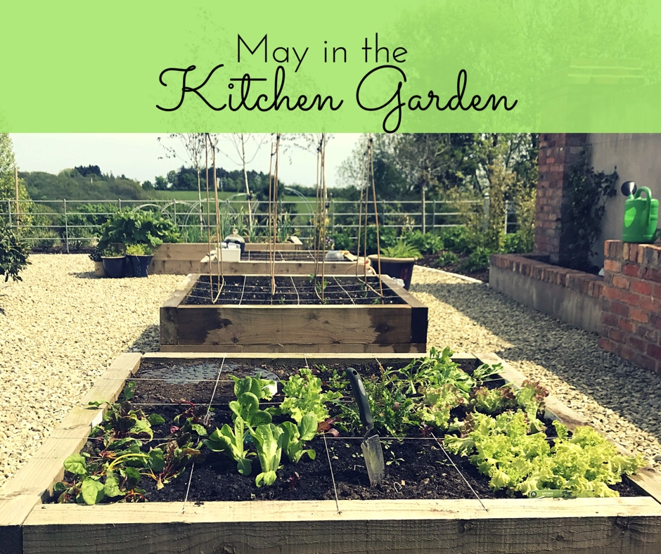 Kitchen Garden - what to vegetables to plant in May.