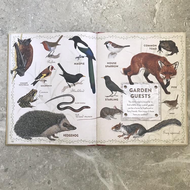 British Wildlife children's book