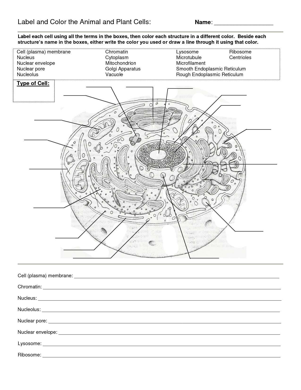 Worksheet Animal Cell Coloring Animal Color Page