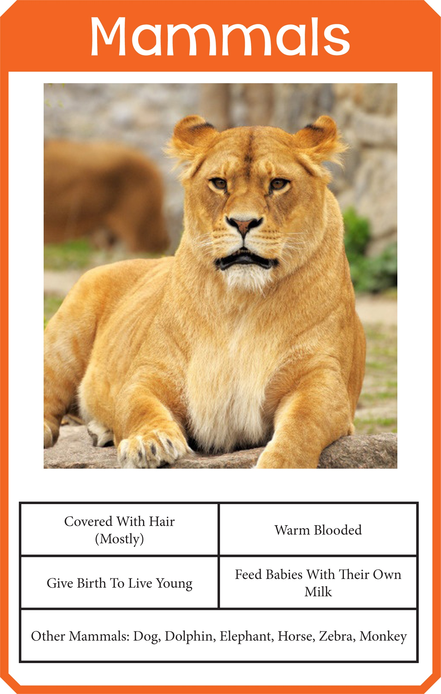 Animal Classification Cards