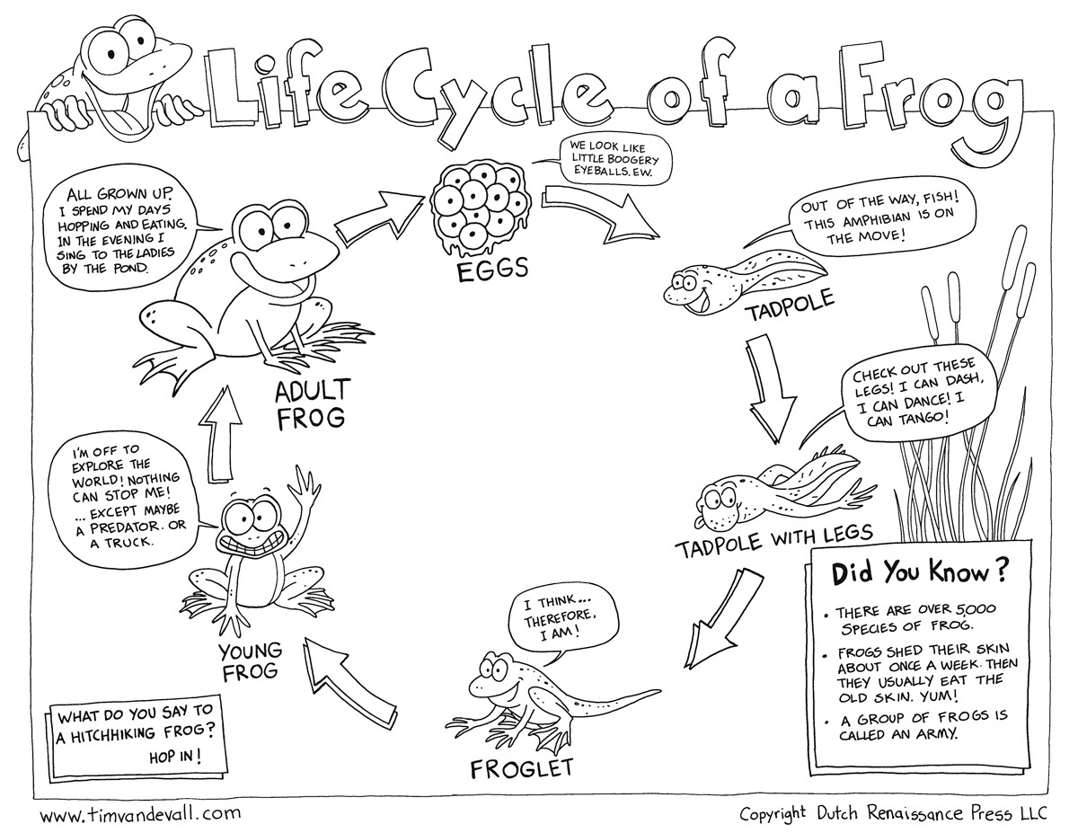 Life Cycle Of A Frog Free Printable Book