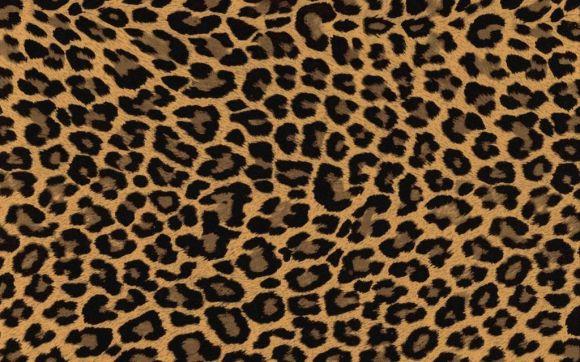 leopard021-580x362