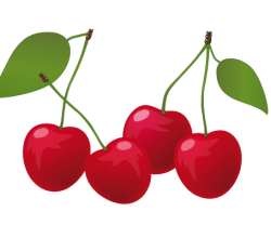 Vector Red Cherry Illustration