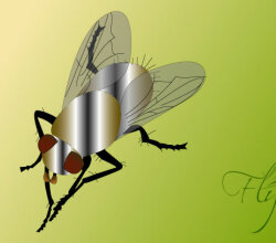 Fly Bug Insect Vector