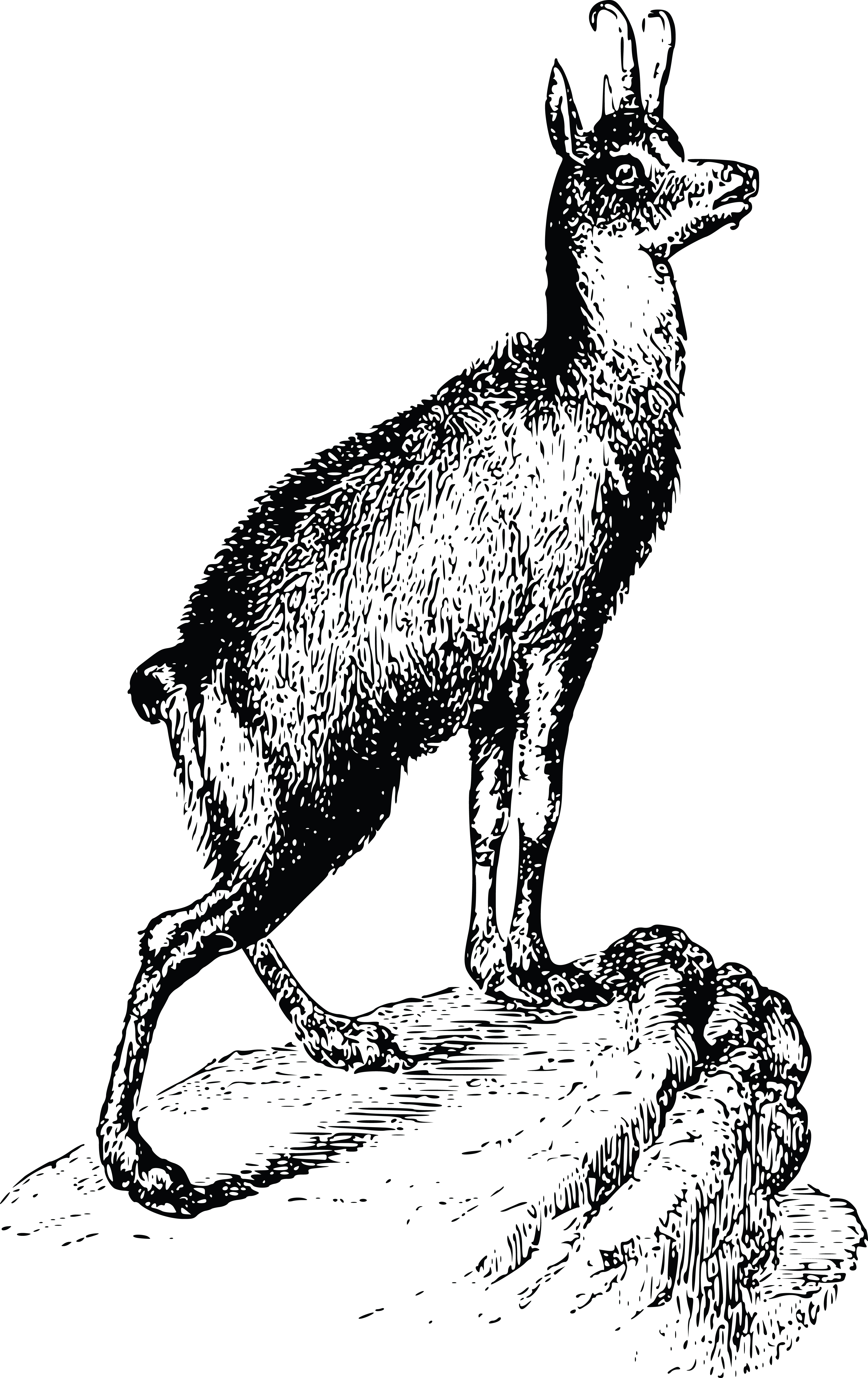 Free Clipart Of A Chamois Antelope