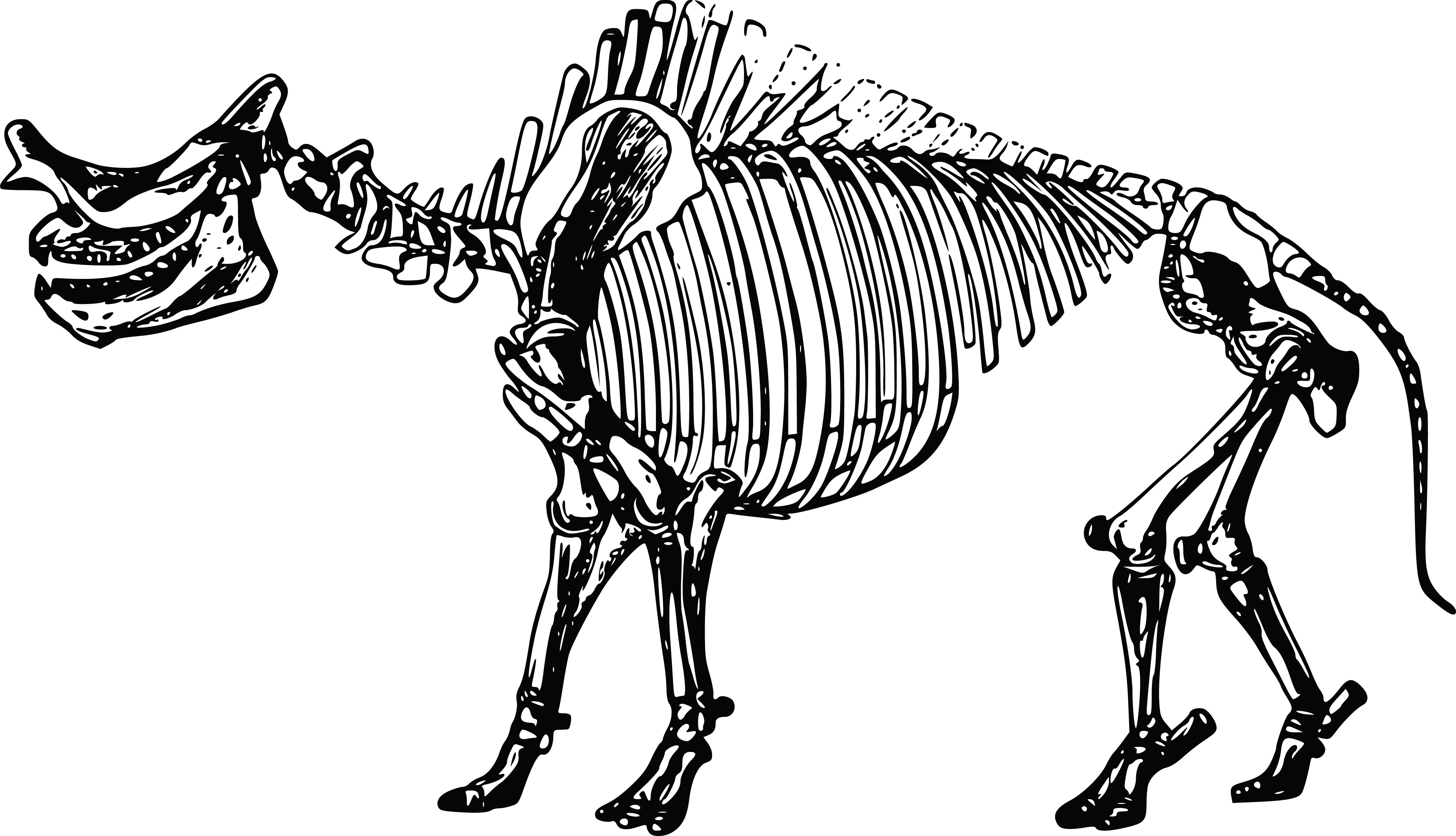 Free Clipart Of A Dinosaur Skeleton
