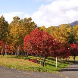 札幌 真駒内公園の紅葉