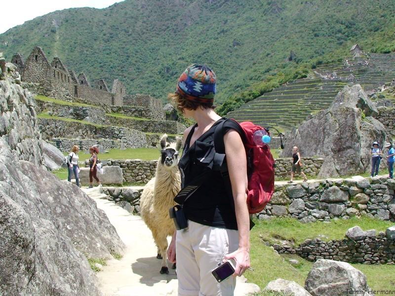 Alpaca following me