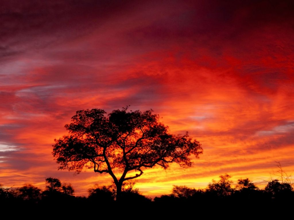Africa 4k Wallpapers For Your Desktop Or Mobile Screen