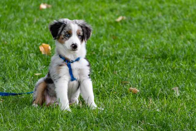puppy on grass field