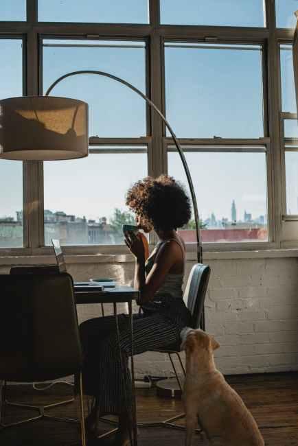 anonymous black female freelancer using laptop near dog