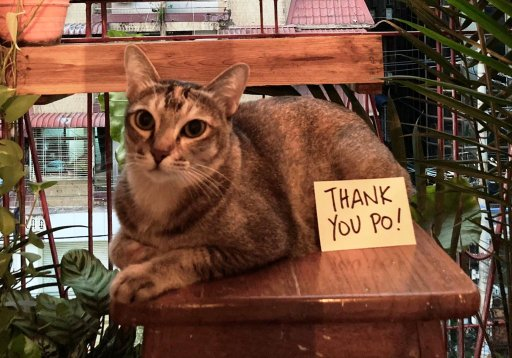 This cat just made history as the first pet to be repatriated amid a pandemic