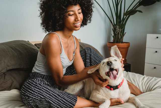 cheerful black female chilling with positive dog in bedroom at home