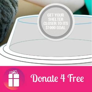 Donate4Free to a Cat Shelter
