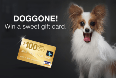 100 Gift Card Giveaway with Dog