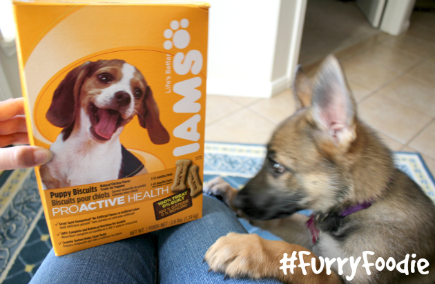 Iams Dog Biscuits Small