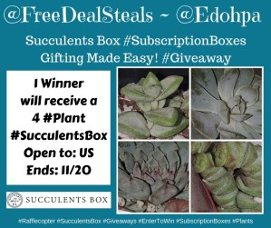 Succulents Box
