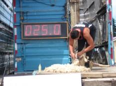 9.2 SPeed Shear in Takapau (1)