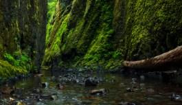 Farming for Cascadia and Bioregional Awakening
