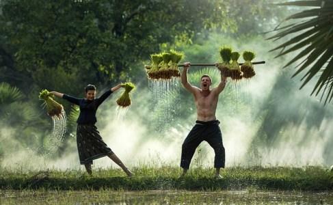 『一本植え農法』は自給自足にもってこい