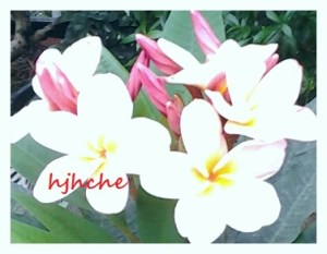 Sesuci bunga alam