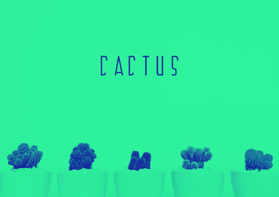Cactus Display Free Typeface
