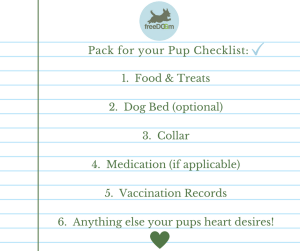 Dog Boarding In Miami - What To Pack For Your Pup