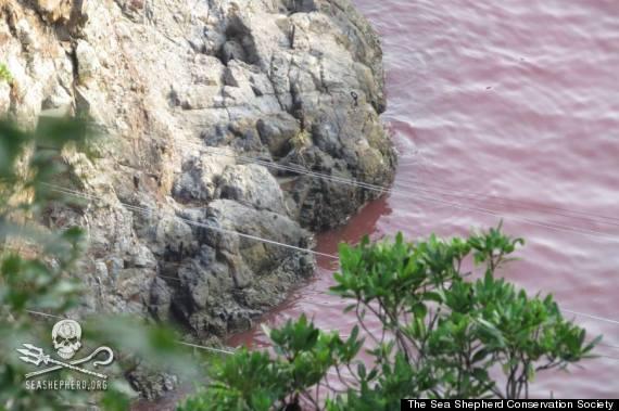 Taiji, 12 septembre, les images du massacre | Free ...
