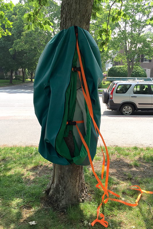 Securing Touch Punch Trunk to a tree in Elm Park, Worcester, MA. Freedom Baird